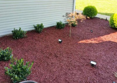 Magic Mulch Gallery